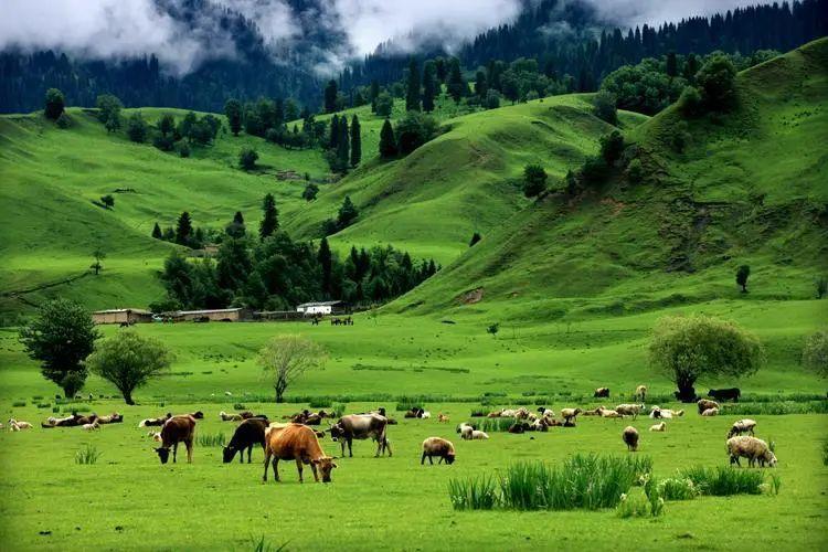 除了棉花,地大物博的新疆还有各种美景美食,不到新疆不知中国之大!|新疆 8