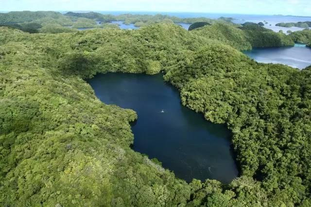 比马尔代夫更接近天堂的岛屿,帕劳!|国外旅游 7