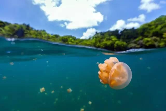 比马尔代夫更接近天堂的岛屿,帕劳!|国外旅游 5