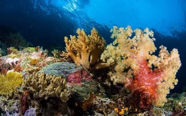 比马尔代夫更接近天堂的岛屿,帕劳!|国外旅游 9