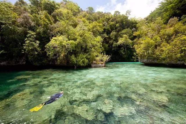 比马尔代夫更接近天堂的岛屿,帕劳!|国外旅游 15