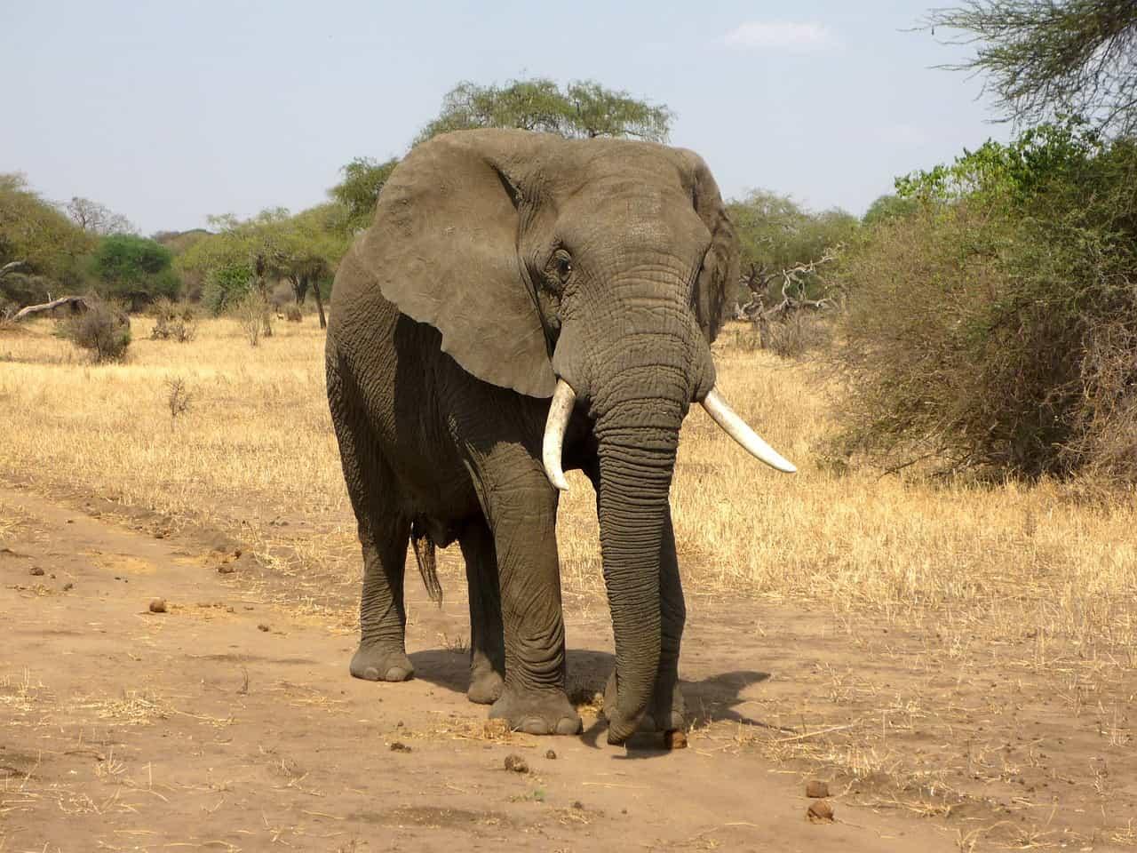 一张大象的图片