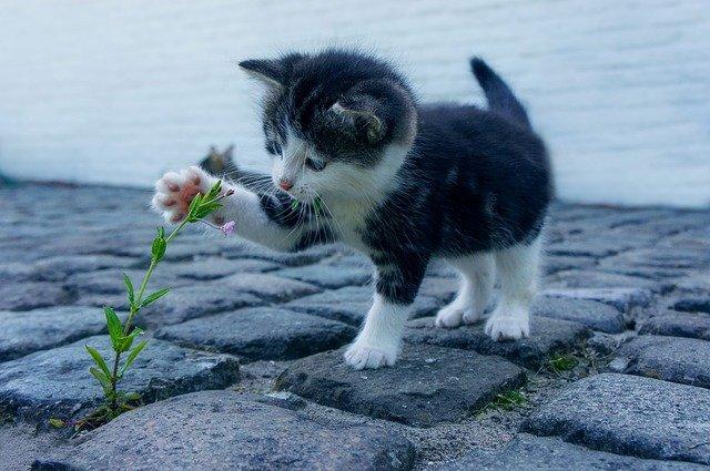 一只小猫玩花的图片