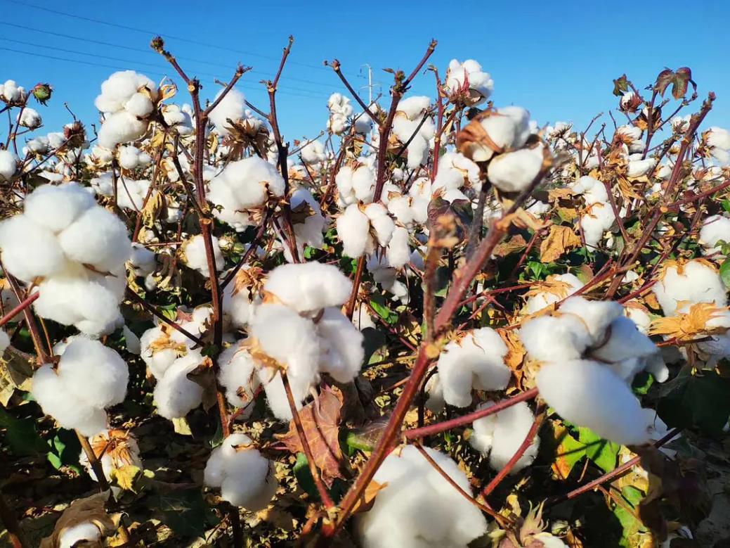 除了棉花,地大物博的新疆还有各种美景美食,不到新疆不知中国之大! 新疆