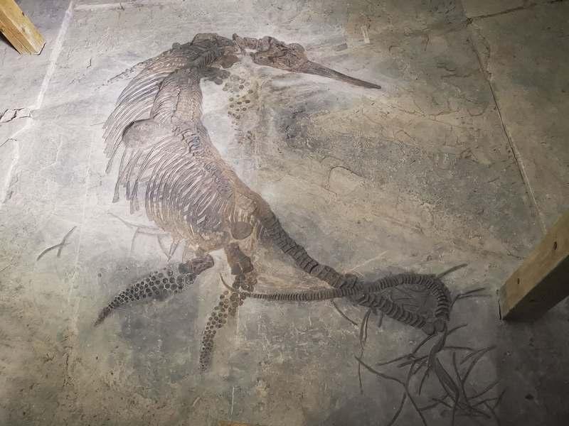 关岭化石群国家地质公园 9