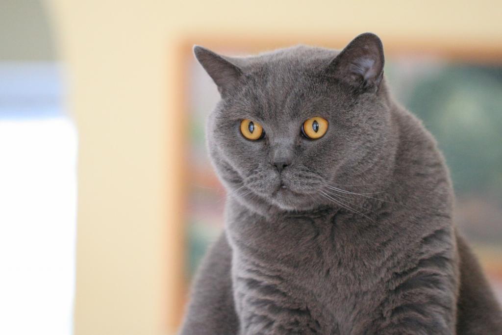 一只猫的图片 眼睛大大的