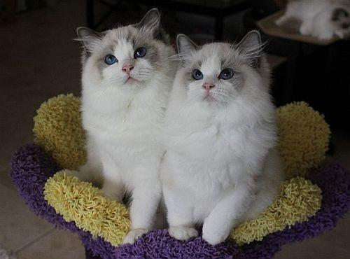 猫猫的图片一张