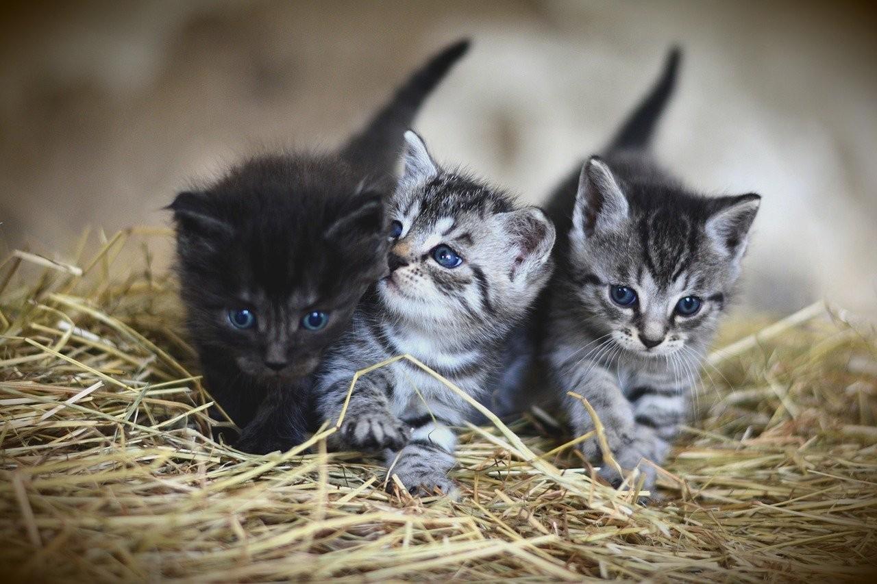 三只小奶猫的图片