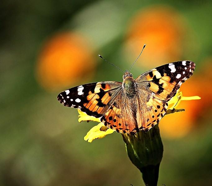 一只蝴蝶的图片好可爱